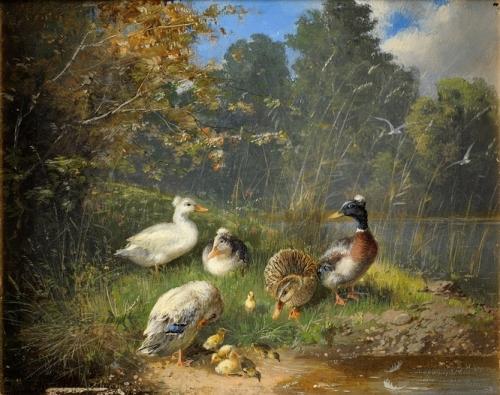 Family of ducks on the river bank.jpg