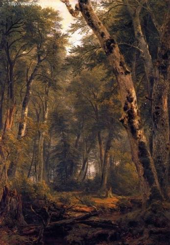 Study: Woodland Interior.jpg