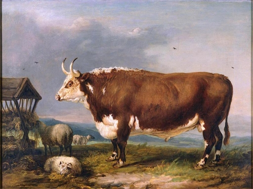 Hereford Bull with Sheep by a Haystack.jpg
