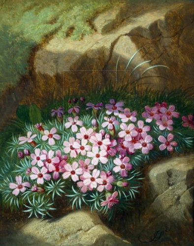Alpine Flowers.jpg