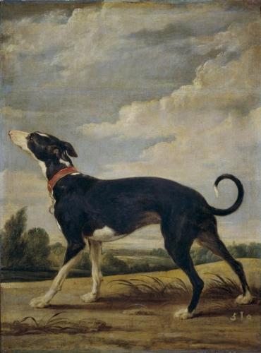 A Greyhound.jpg