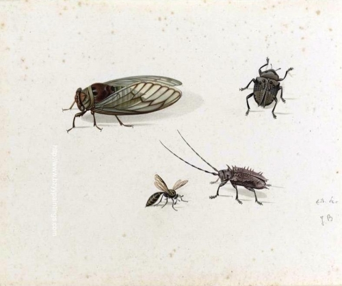 Two Beetles a Wasp and a Cicada.jpg