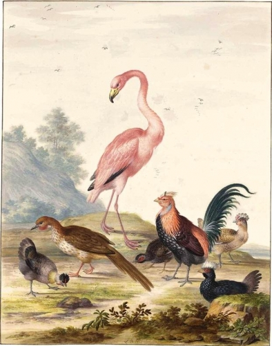 A Flamingo and Exotic Poultry in a Landscape.jpg