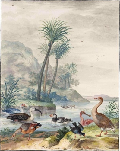 Exotic Waterbirds in a Landscape.jpg