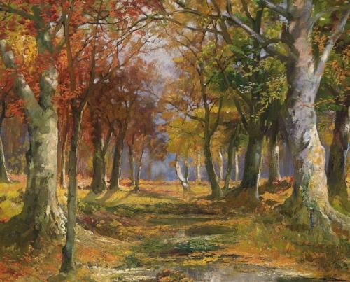 Forest in Autumn.jpg