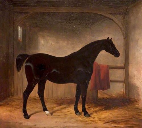 Black Horse in a Loose Box.jpg