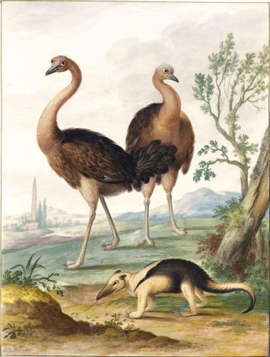 Two Ostriches and an Ant-Eater in a Landscape.jpg